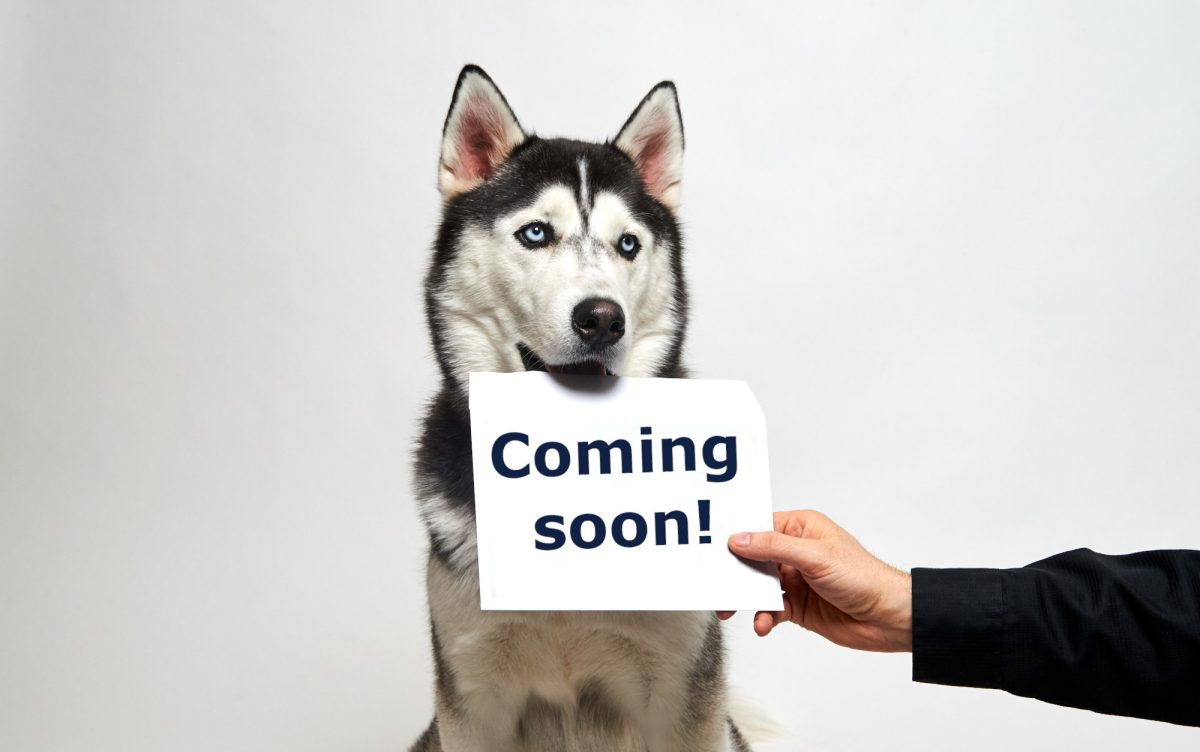 "jonathan the husky holding a sign that says ""coming soon"""